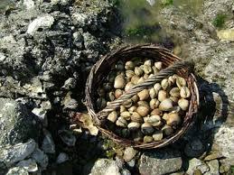 pêcher-coquillage